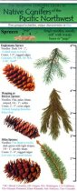 The Ecopress Complete Guide to Native Conifers of the Pacific Northwest