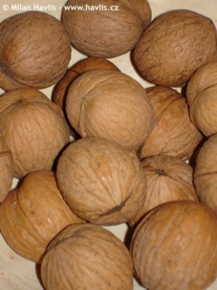 Juglans regia - common walnut