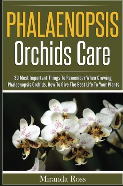 Phalaenopsis Orchids Care
