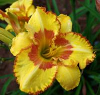 Denivka Irresistible Charm