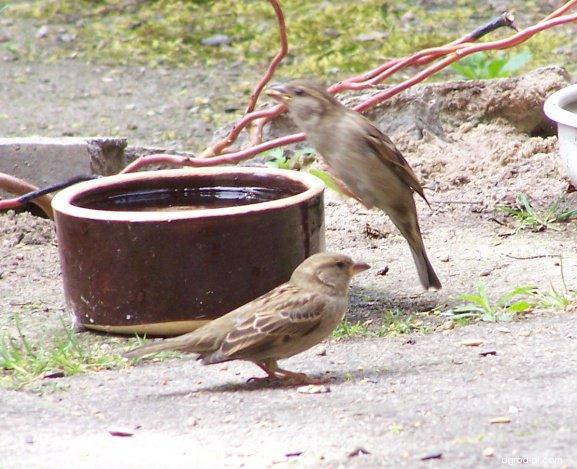 Pítko pro ptáky