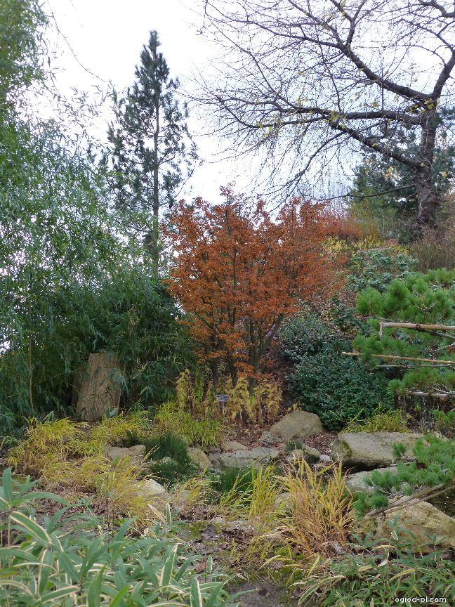 Botanická zahrada Praha - Trója