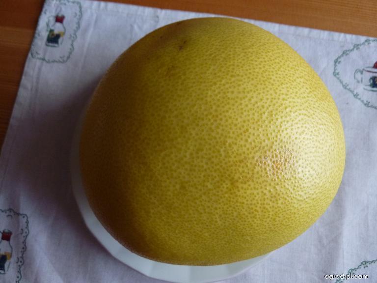 Pomelo - plod (Citrus maxima)