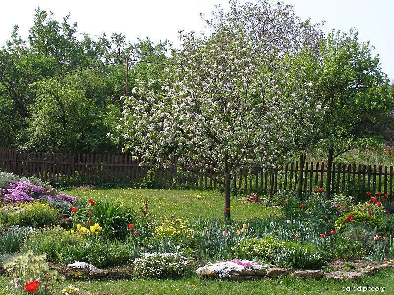 Jaro na zahradě, zahrádka v Popicích