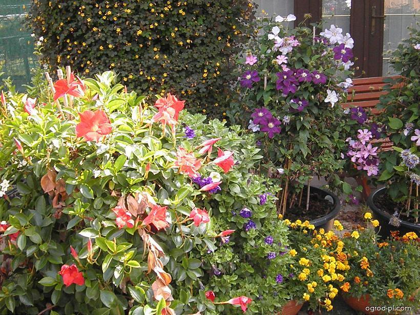 Výstava balkonových květin