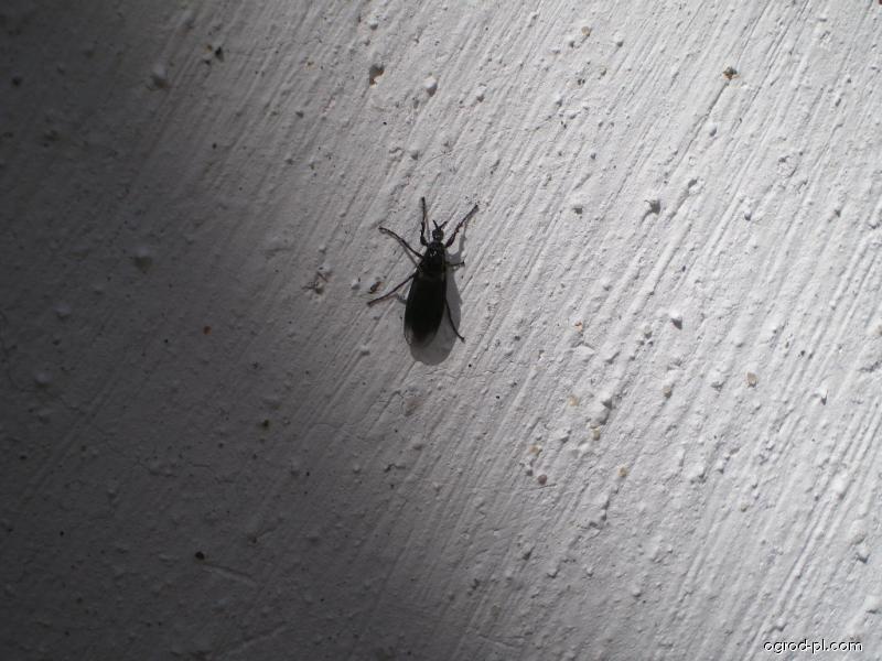 Neznámý hmyz