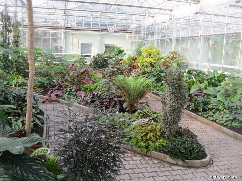 Skleník botanické zahrady Praha Malešice