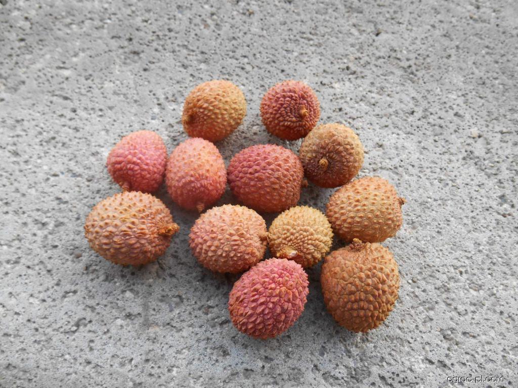 Ličí čínské - plody (Litchi chinensis)