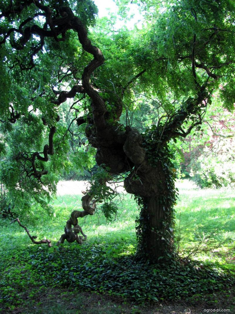 Park Buchlovice