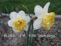 Narcissus 'Blues'  narcyz kwiaty